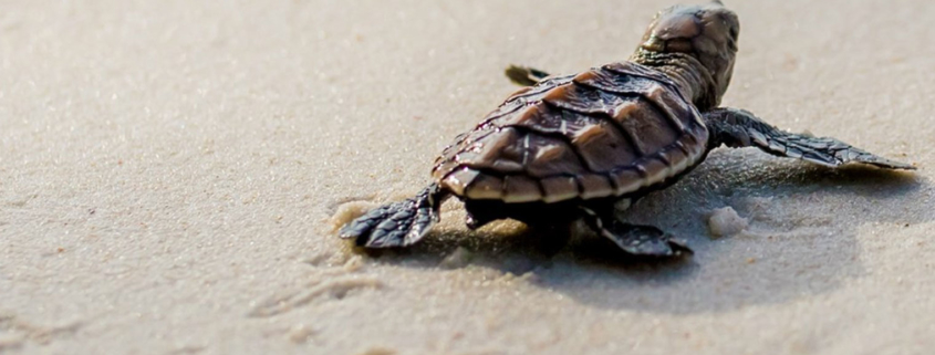 Schildpad-turtle-speed-up-your-website